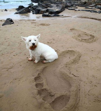Giant footprints have been spotted across the North of Ireland this week (Photo William Cherry/Presseye)