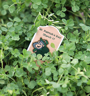 The shamrock, St Patrick's tool of choice. (Picture: Getty Images)