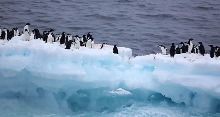 Antarctic penguins' depleting habitat. (Picture: Joyce Ferder Rankin)