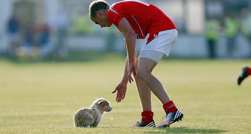 GAA Football All Ireland Senior Championship Round 2, Newbridge, Co. Kildare 13/7/2013 Kildare vs Louth Ciaran Byrne of Louth removes a stray dog from the pitch Mandatory Credit ©INPHO/Donall Farmer