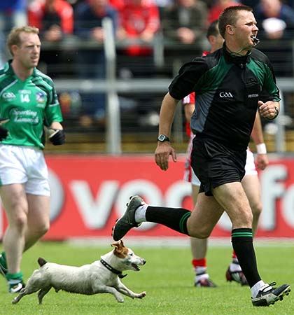 Munster GAA Football Senior Football Championship Final 5/7/2009 Cork vs Limerick Referee Rory Hickey is chased by a dog Mandatory Credit ©INPHO/Lorraine O'Sullivan