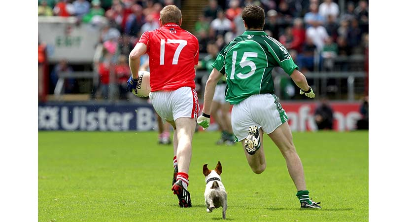 Munster GAA Football Senior Football Championship Final, 5/7/2009 Cork vs Limerick A dog follows the action between Cork and Limerick Mandatory Credit ©INPHO/Morgan Treacy