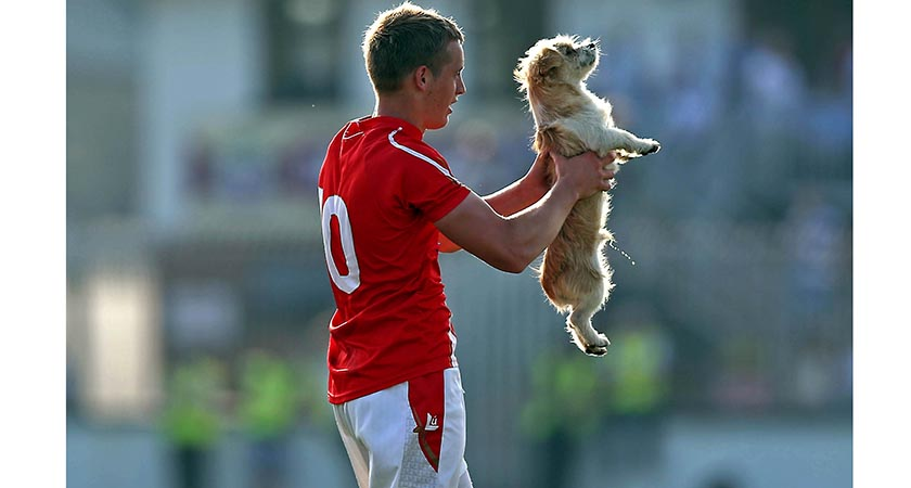 GAA Football All Ireland Senior Championship Round 2, Newbridge, Co. Kildare 13/7/2013 Kildare vs Louth The Wee County, ... Ciaran Byrne of Louth removes a stray dog from the pitch Mandatory Credit ©INPHO/Donall Farmer