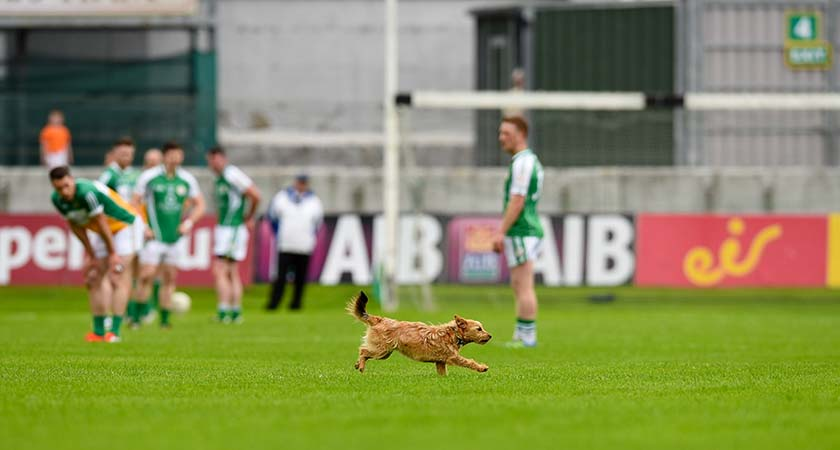 GAA Football All Ireland Senior Championship Round 1B, O'Connor Park, Offaly 25/6/2016 Offaly vs London A dog runs across the field during the game Mandatory Credit ©INPHO/Tom Beary