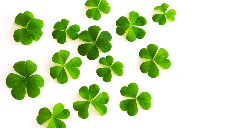 Spoiler alert —this may not be a shamrock, just a humble clover (Picture: iSock)