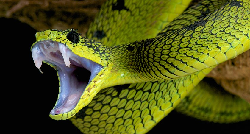 Ireland is one of the few snake-free places in the world (Picture: iStock)