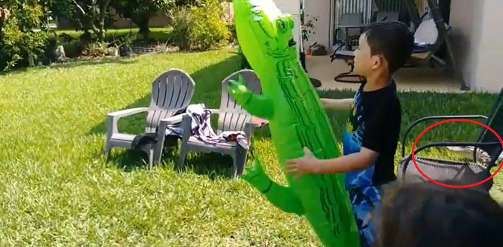 Alligator in garden