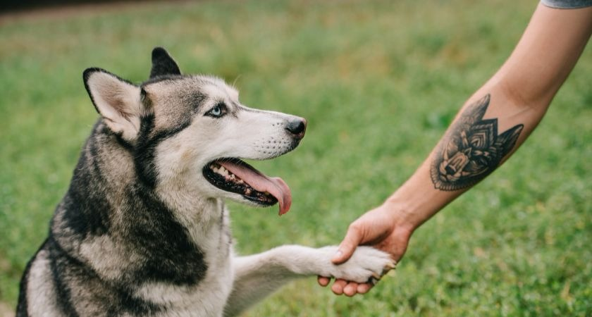 Grieving pet owners in Ireland are using their animal's ashes to ink 'memorial tattoos'.