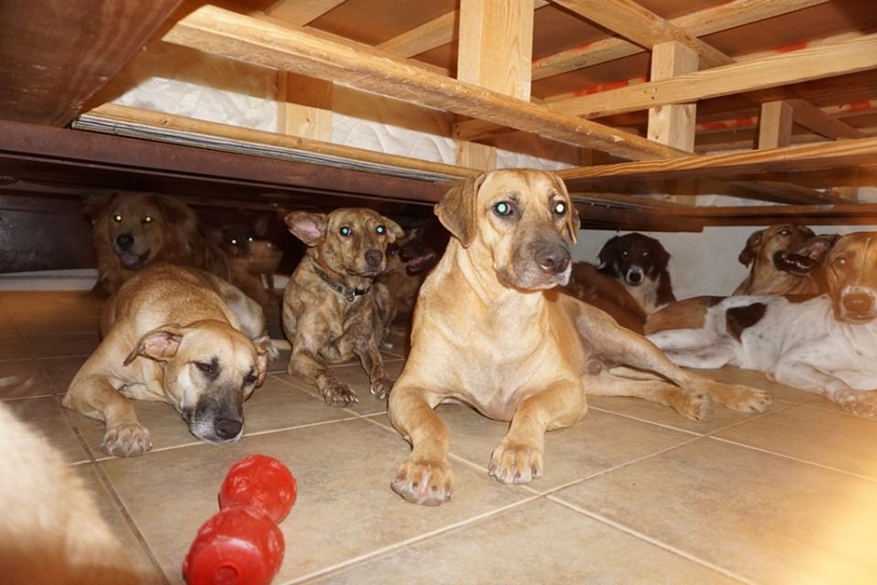 Woman shelters 97 dogs in her home during Hurricane Dorian