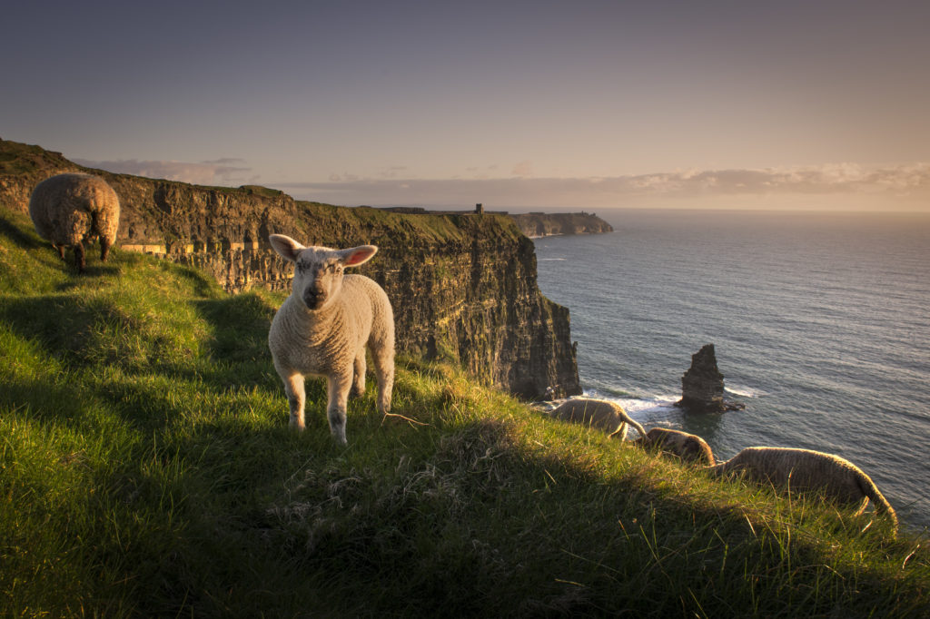 Irish B&B by magnificent Cliffs of Moher named one of the best in the world