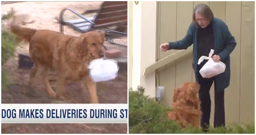 WATCH: Adorable dog delivers shopping to his owner's quarantined neighbour during coronavirus lockdown