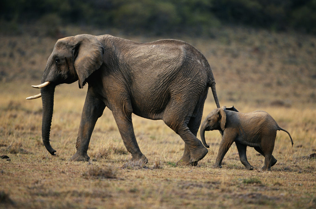 Humans behind 70% in wildlife decline over the past 50 years